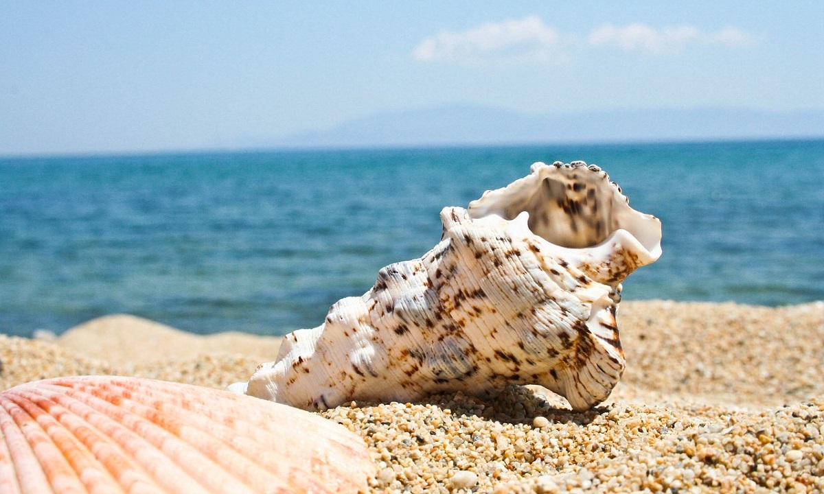 Mušle na pláži