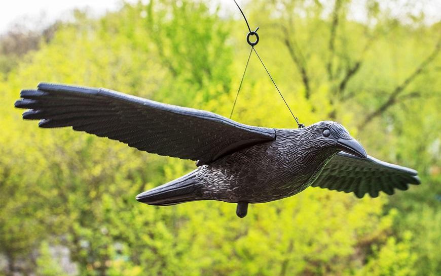 Vták na plašenie